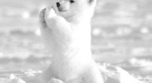 "Unbelievably Cute Animals #cuteanimals "" #cuteanimals #babyanimals "" #babyanimals #adorableanimals explore…"