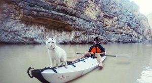 "Animals  #adventurecats "" #adventurecats #amazingcats…"