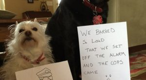 Dogs with Signs of Shame | Dog Wall of Shame