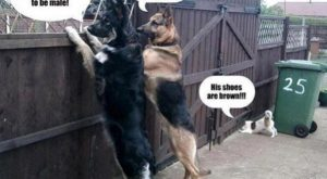 Police Dogs – funny pictures – funny photos – funny images – funny pics…