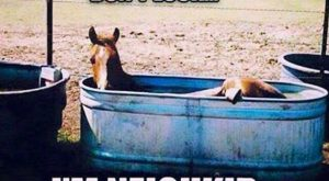 "Horse humor quote, ""Don't look, I'm neigh kid"". Funny horse laying in his trough…"