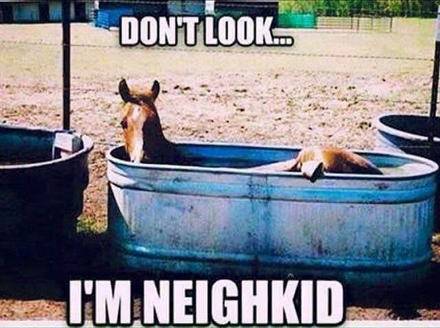 """Horse humor quote, """"Don't look, I'm neigh kid"""". Funny horse laying in his trough…"""