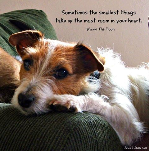 """""""Sometimes the Smallest Things take up the Most Room in your Heart"""" …… Winnie…"""