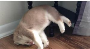25 Animals That Sleep Wherever They Please