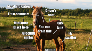 Anatomy of the horse ~ as described in silly terms