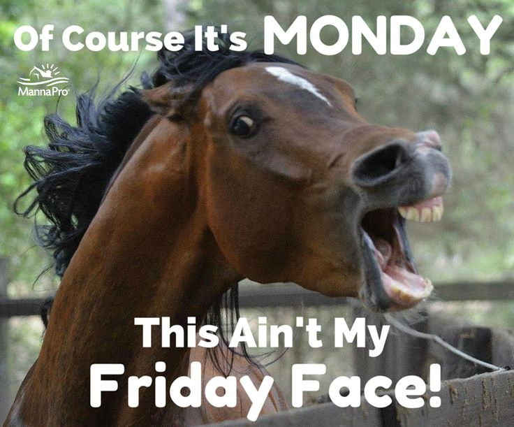 silly horse pics – Google Search