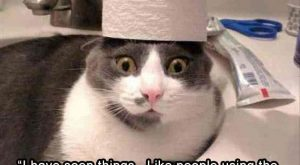 "Bichon Frise, Cat, Puppy, Funny animal, Laughter, Image, Meme, Humour: the ""have seen things.…"