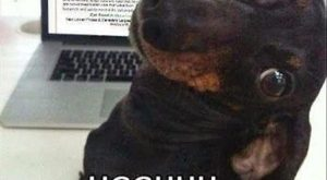 Dachshund, Labrador Retriever, Puppy, Hot dog, Cat, Image, Funny animal, Humour: wikiHow UGGHHH NOT…