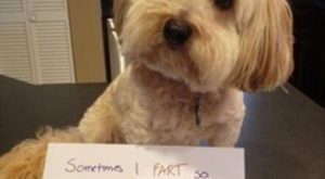 pet shaming 20 Some pets need a public shaming (31 Photos)