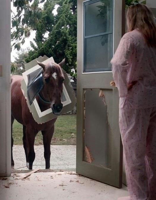 Oh, DOG bad. ~ Horse but since IT IS a Dog I'll post it…