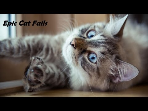 CAT FAILS : Funny Prank Vine Hilarious Compilations – The best Cat Fails .…