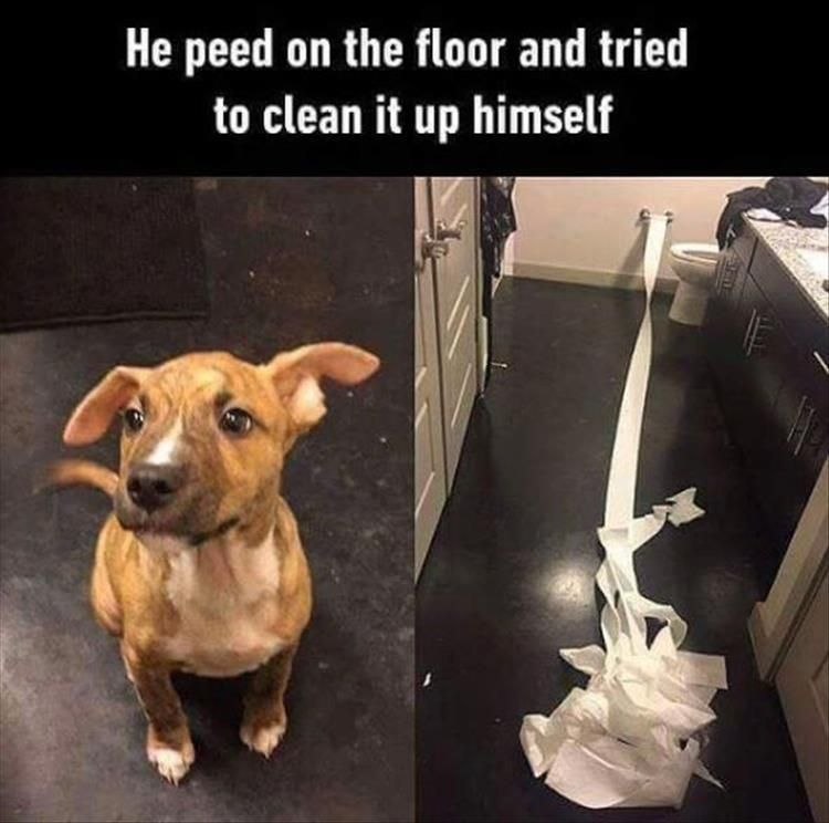 """Funny Animal Pictures Of Today – #funnymemes """" #funnymemes #funnypictures """"…"""