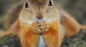 Therapist squirrel wants to hear your problems