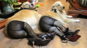 Rosie, who let society's pressures get to her. |  Biggest Dog Fails Of…