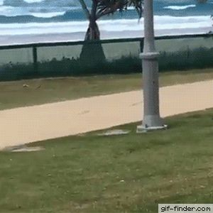 Overexcited Dog Hilariously Fails Jump Over Fence – Tap the pin for the most…