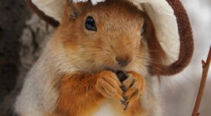 All squirrels should wear hats!:)