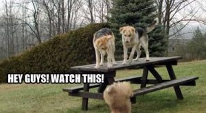 Hey guys watch this – funny dog fails –