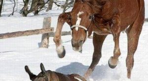 funny horse pictures with captions | funny horse pictures with captions (13) | Flickr…