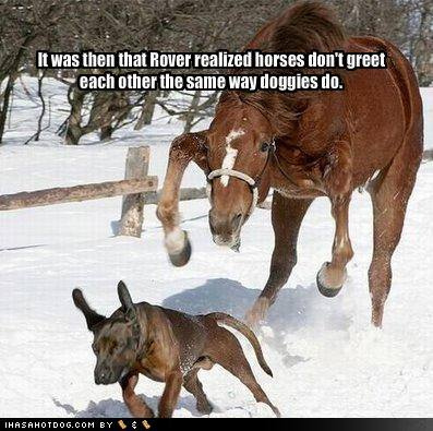 funny horse pictures with captions | funny horse pictures with captions () | Flickr…
