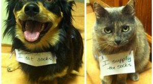 The best of cat shaming – Part 7 – FB TroublemakersFB Troublemakers