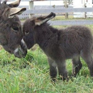 Funny Donkey Pictures with Captions | … captions funny donkey pictures with captions funny…