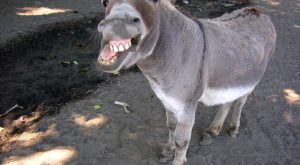 donkey | Get Out of My Face, You Donkey & #171; Alia Yunis' Blog
