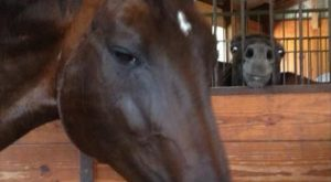 "#ArabianHorses ""> #ArabianHorses #Humor ""> #Humor 