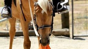 Silly Horse those aren't carrots!! Giant carrots have to get both at same time!!…