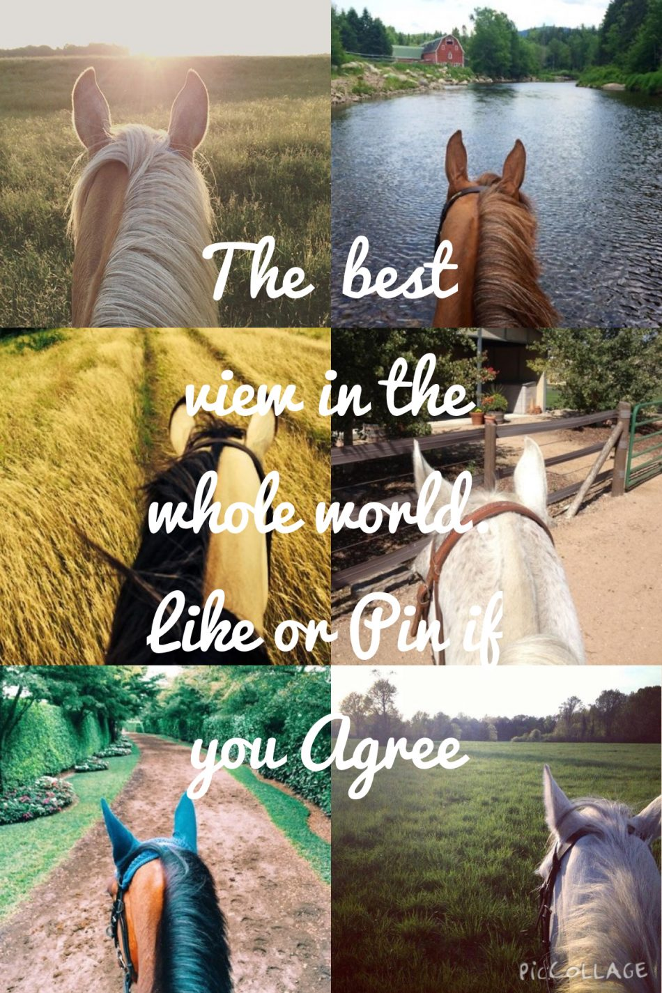 HOW DOES RIDING HORSES MAKE YOU FEEL?? COMMENT BELOW!!