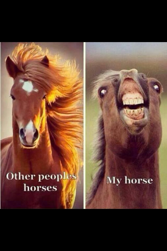 My horse in one picture