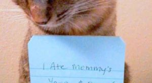 You will never cat shame them |  Signs You Might Be Really Obsessed…