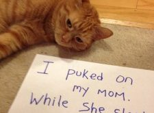 catshaming Gotta love some good old fashioned cat shaming