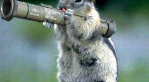 Hilarious Squirrel… Dont mess with it!