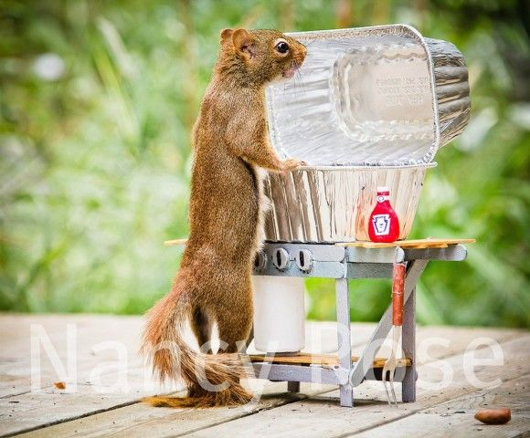 Funny Squirrels by Nancy Rose