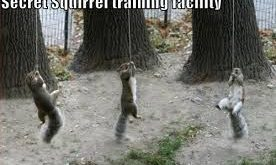 funny squirrels – Google Search