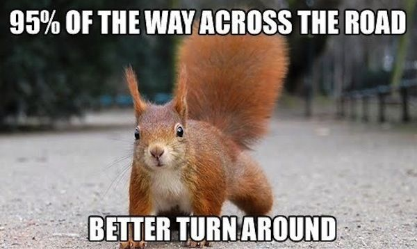 Funny Squirrels Fit For Fun