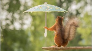 Funny Squirrel With Umbrella Funny Wallpaper | funny squirrel with umbrella funny wallpape...