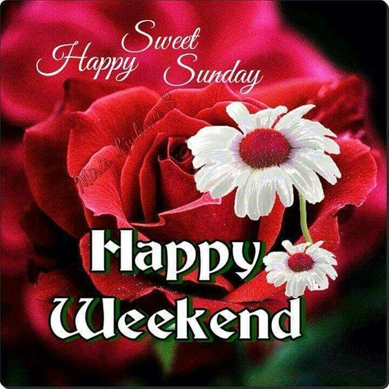 Sweet happy sunday happy weekend weekend sunday sunday morning sweet happy sunday happy weekend weekend sunday sunday morning sunday greeting sunday blessings sunday m4hsunfo