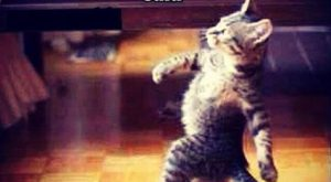 My parents accused me of being a liar funny memes cat meme lol funny…