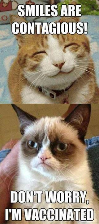 Grumpy Cat is vaccinated .. LOL so weird reminds me of my sister who…