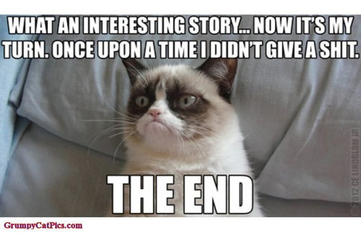 The world's grumpiest cat! 40+ Funniest Grumpy Cat Memes Pics #memes explore Pinterest&#...