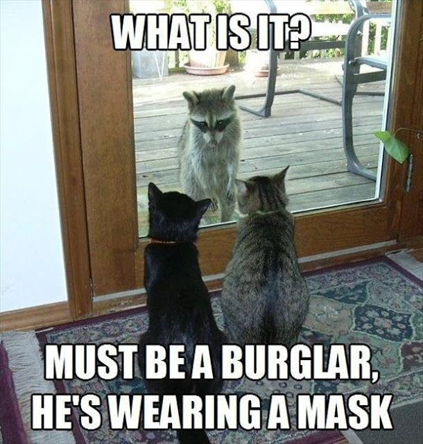 Funny animal captions – part , funny meme pictures, funny memes, animal memes,…