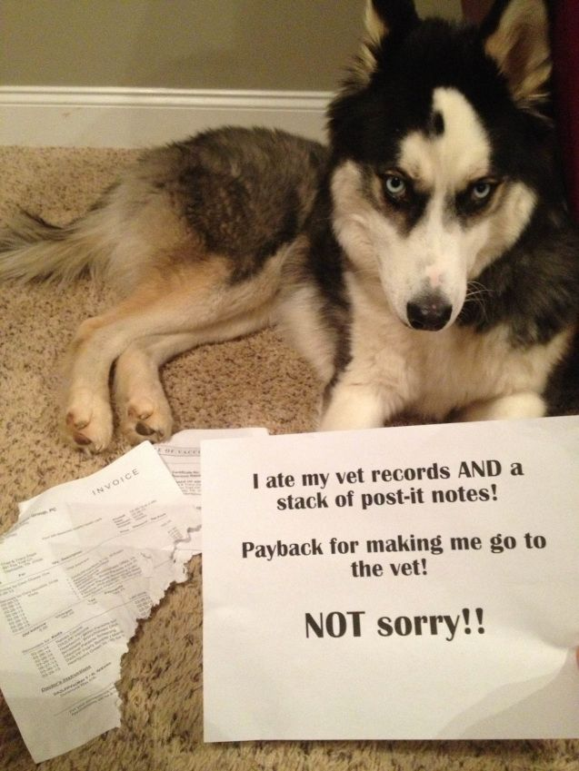I ate my vet records AND a stack of Post Its. Payback for making…
