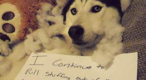 """""""I continue to pull stuffing out of our couch, even though I have a…"""
