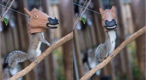 The world's most hilarious squirrel feeder