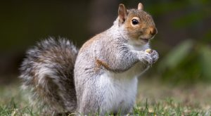 Watch These Cute Squirrels Going About Their Lives In Their Hilarious Squirrel Way