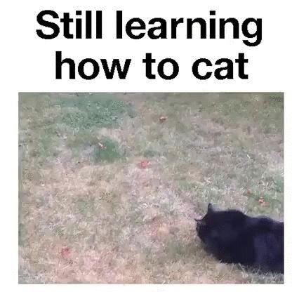 learning how to cat lol GIF