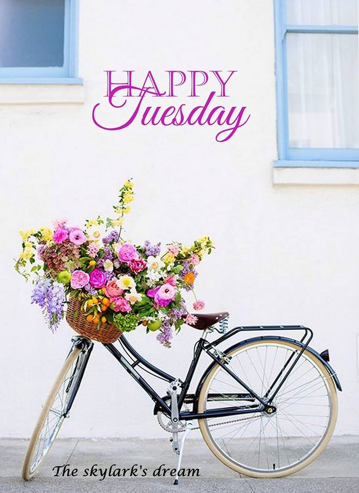 Pretty Happy Tuesday Quote Good Morning Tuesday Tuesday Quotes Good
