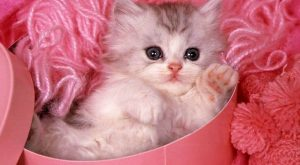 cute cats images   in bed yellow cat and back ground wallpaper three cat…