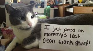Best Of & #;Cat Shaming& #; & #;  . My cat does the…